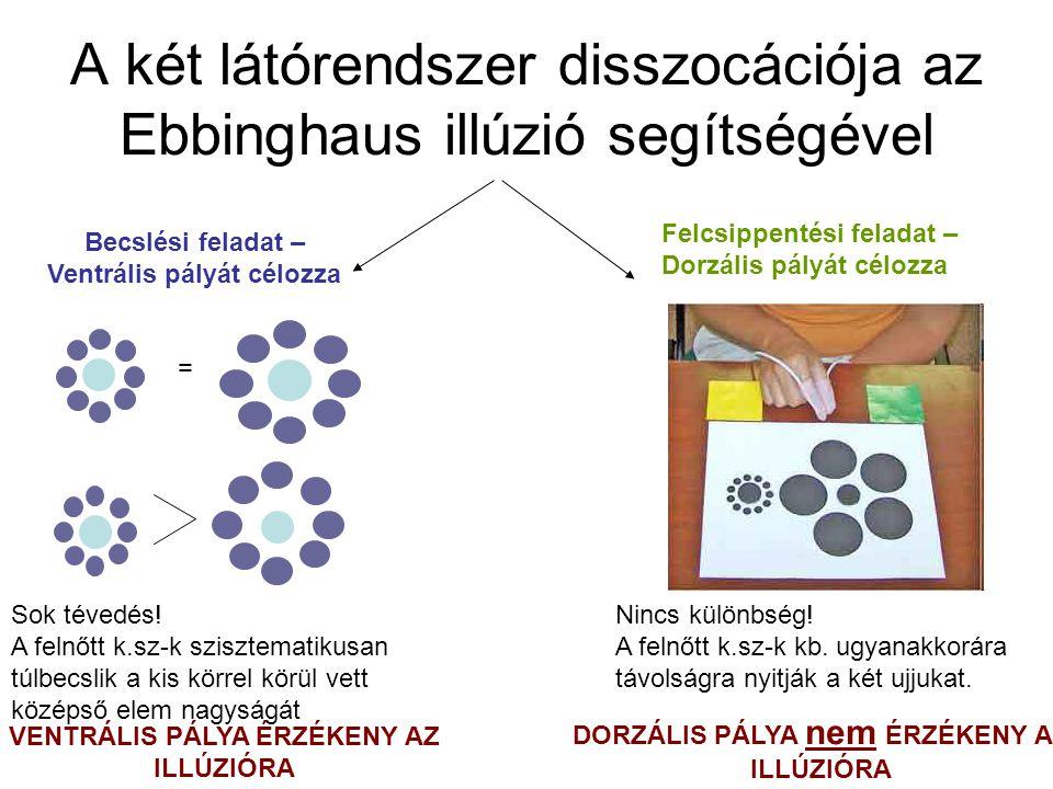 A két látórendszer disszocációja az Ebbinghaus illúzió segítségével Felcsippentési feladat – Dorzális pályát célozza Becslési feladat – Ventrális pály