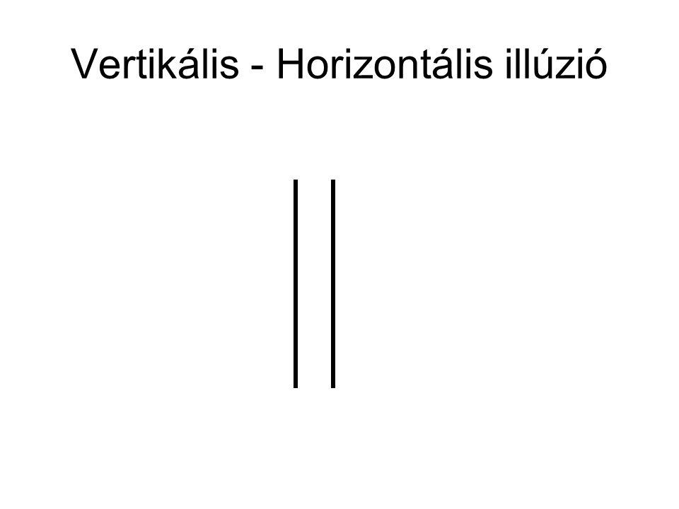 Megfigyelések •Az alsó horizontális egyenes Rövidebbnek tűnik, mint a felső Magyarázat alapjai •A két összetartó egyenes a a perspektíva illúzióját kelti Ponzo illúzió Tériség benyomása Távolabb van Perspektíva De ettől miért látszik rövidebbnek?