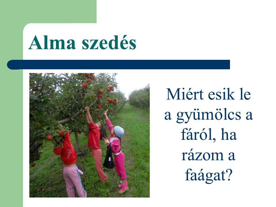 Alma szedés Miért esik le a gyümölcs a fáról, ha rázom a faágat?