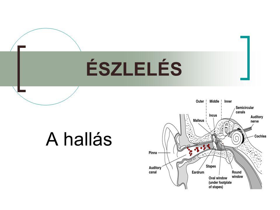 A hallórendszer  Fül  Külső fül  Középfül  Belső fül  Hallópálya  Agyi struktúrák