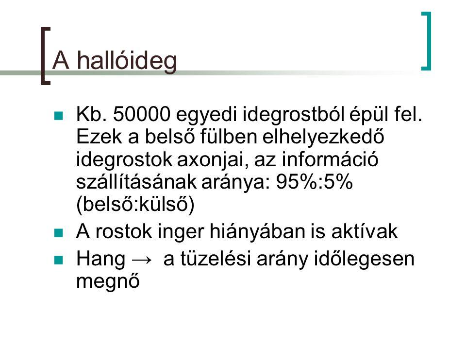 A hallóideg  Kb.50000 egyedi idegrostból épül fel.