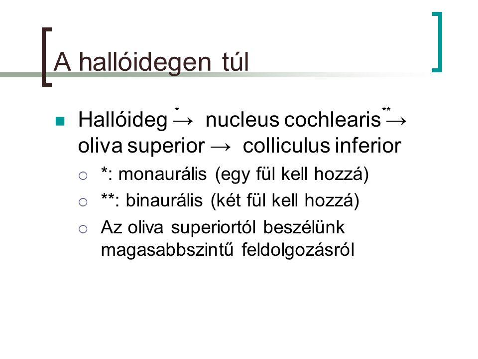 A hallóidegen túl  Hallóideg → nucleus cochlearis → oliva superior → colliculus inferior  *: monaurális (egy fül kell hozzá)  **: binaurális (két fül kell hozzá)  Az oliva superiortól beszélünk magasabbszintű feldolgozásról ***