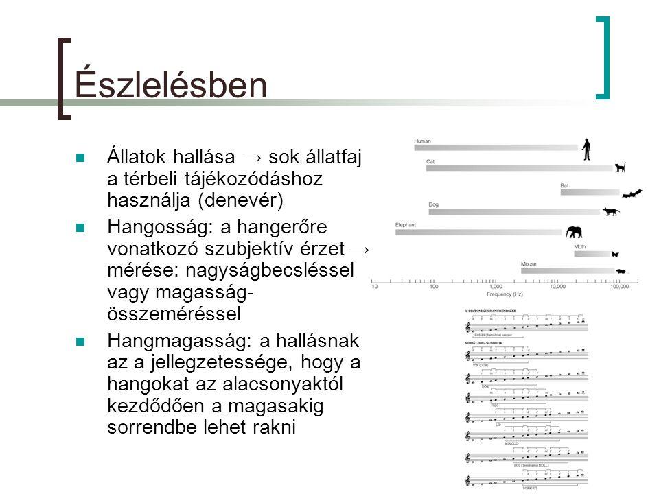 Észlelésben  Állatok hallása → sok állatfaj a térbeli tájékozódáshoz használja (denevér)  Hangosság: a hangerőre vonatkozó szubjektív érzet → mérése: nagyságbecsléssel vagy magasság- összeméréssel  Hangmagasság: a hallásnak az a jellegzetessége, hogy a hangokat az alacsonyaktól kezdődően a magasakig sorrendbe lehet rakni