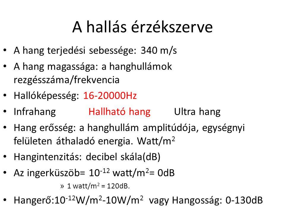 A hallás érzékszerve • A hang terjedési sebessége: 340 m/s • A hang magassága: a hanghullámok rezgésszáma/frekvencia • Hallóképesség: 16-20000Hz • Inf