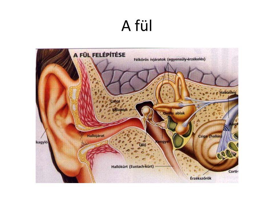 A fül