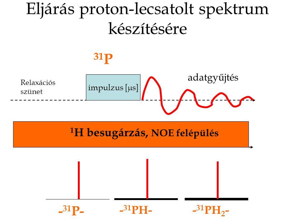 Eljárás proton-lecsatolt spektrum készítésére impulzus [  s] 31 P 1 H besugárzás, NOE felépülés adatgyűjtés Relaxációs szünet - 31 P- - 31 PH-- 31 PH