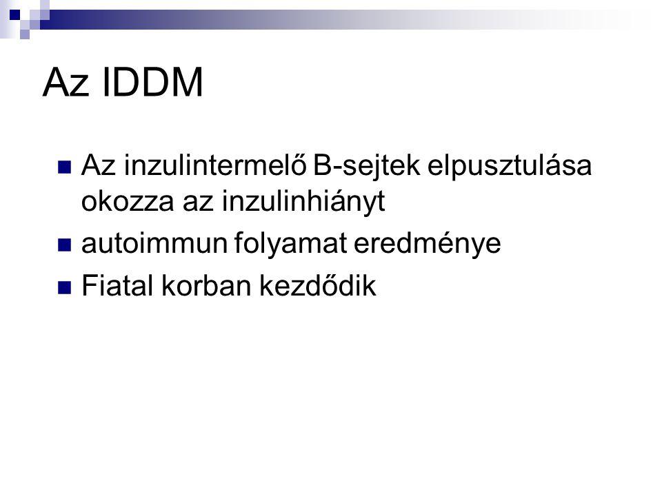 Az IDDM  Az inzulintermelő B-sejtek elpusztulása okozza az inzulinhiányt  autoimmun folyamat eredménye  Fiatal korban kezdődik