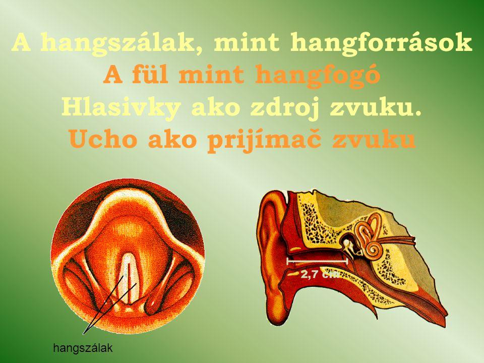A hangszálak, mint hangforrások A fül mint hangfogó Hlasivky ako zdroj zvuku.