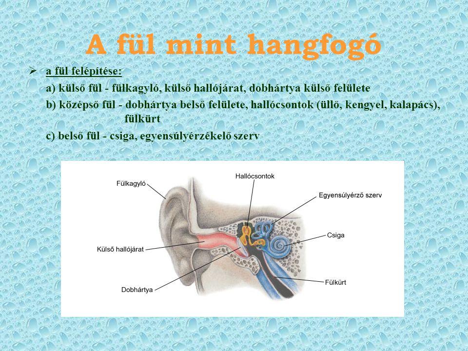 A fül mint hangfogó  a fül felépítése: a) külső fül - fülkagyló, külső hallójárat, dobhártya külső felülete b) középső fül - dobhártya belső felülete, hallócsontok (üllő, kengyel, kalapács), fülkürt c) belső fül - csiga, egyensúlyérzékelő szerv