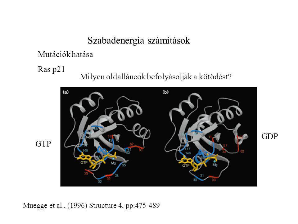 Szabadenergia számítások Mutációk hatása Ras p21 GTP GDP Milyen oldalláncok befolyásolják a kötődést? Muegge et al., (1996) Structure 4, pp.475-489