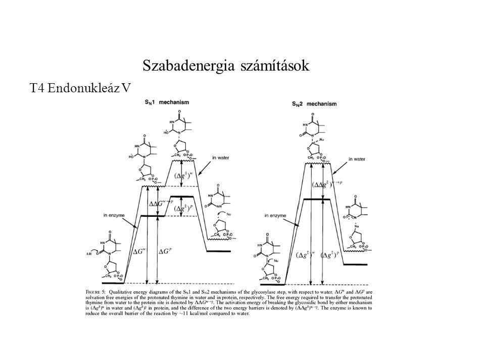 Szabadenergia számítások T4 Endonukleáz V