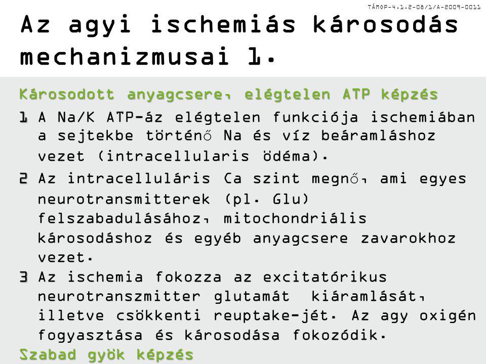 TÁMOP-4.1.2-08/1/A-2009-0011 Az agyi ischemiás károsodás mechanizmusai 1. Károsodott anyagcsere, elégtelen ATP képzés 1 1A Na/K ATP-áz elégtelen funkc