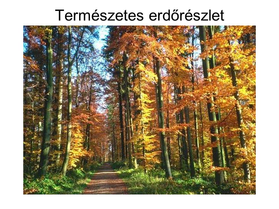 A famegmunkálás feladatai Fakitermelés: erdőgazdasági tevékenység A fát irtással vagy döntéssel termelik ki.