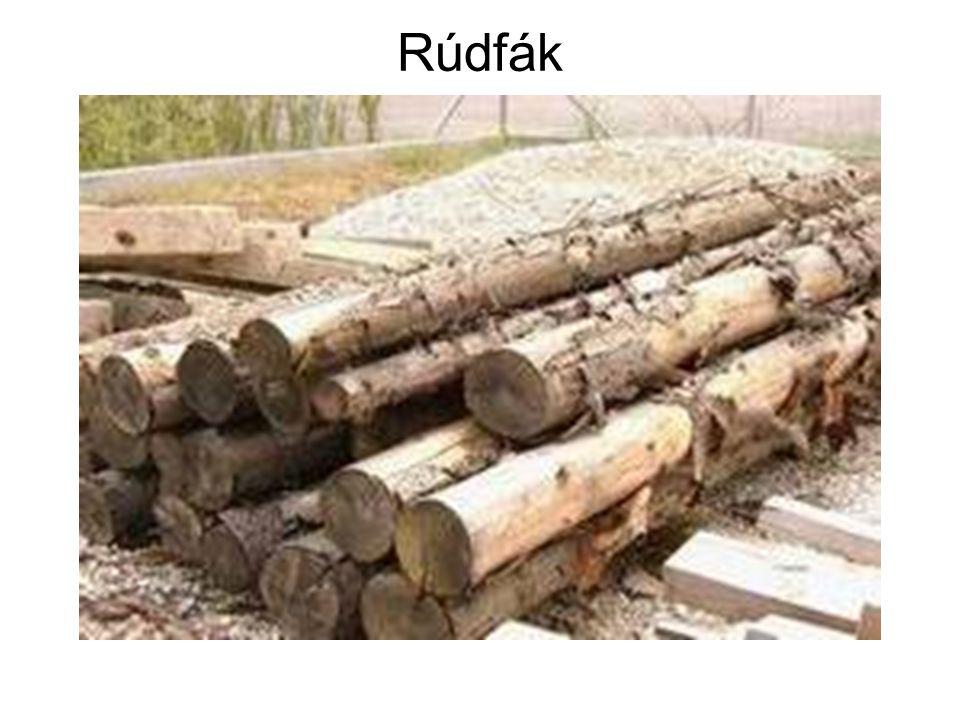A faipar tagozódása Elsődleges famegmunkálás: A kitermelt rönkökből alapanyagokat gyártanak: • fűrészárut; • furnért; • rétegelt lemezt és agglomerált termékeket.