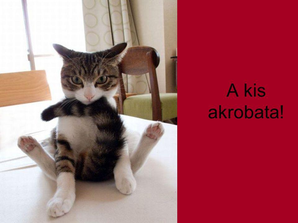 A kis akrobata!