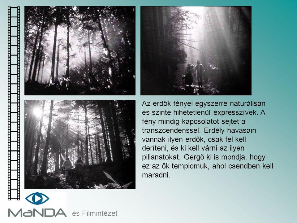 és Filmintézet Az erdők fényei egyszerre naturálisan és szinte hihetetlenül expresszívek. A fény mindig kapcsolatot sejtet a transzcendenssel. Erdély