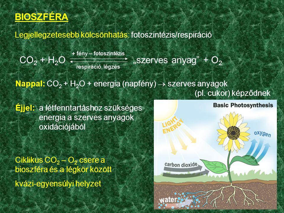 """Legjellegzetesebb kölcsönhatás: fotoszintézis/respiráció BIOSZFÉRA CO 2 + H 2 O""""szerves anyag + O 2 + fény -- fotoszintézis respiráció, légzés Nappal: CO 2 + H 2 O + energia (napfény)  szerves anyagok (pl."""