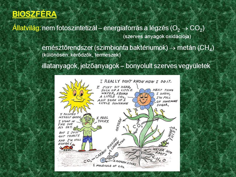 BIOSZFÉRA Állatvilág:nem fotoszintetizál – energiaforrás a légzés (O 2  CO 2 ) (szerves anyagok oxidációja) emésztőrendszer (szimbionta baktériumok)  metán (CH 4 ) (különösen: kérődzők, termeszek) illatanyagok, jelzőanyagok – bonyolult szerves vegyületek