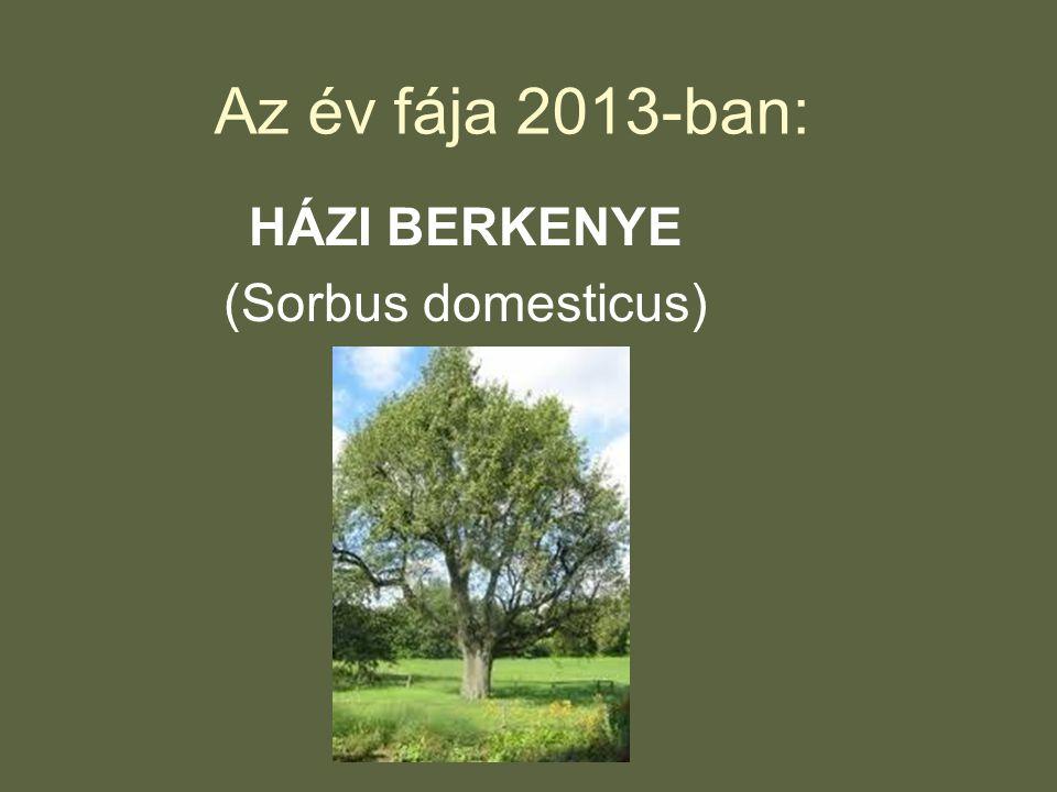 Az év fája 2013-ban: HÁZI BERKENYE (Sorbus domesticus)