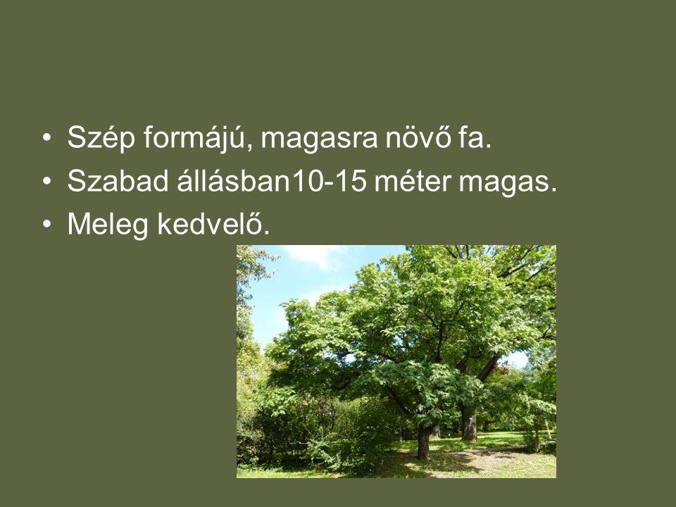 •Szép formájú, magasra növő fa. •Szabad állásban10-15 méter magas. •Meleg kedvelő.