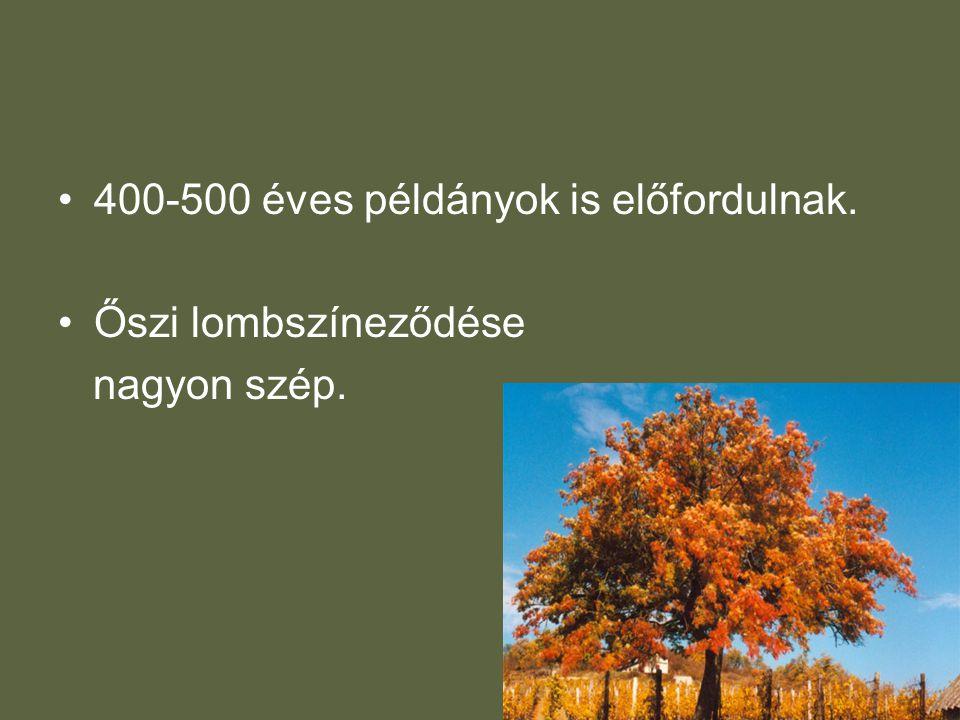 •400-500 éves példányok is előfordulnak. •Őszi lombszíneződése nagyon szép.