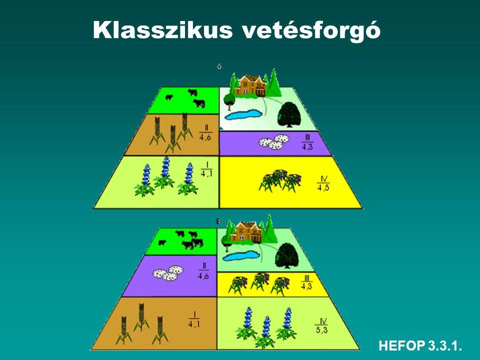 HEFOP 3.3.1. Klasszikus vetésforgó
