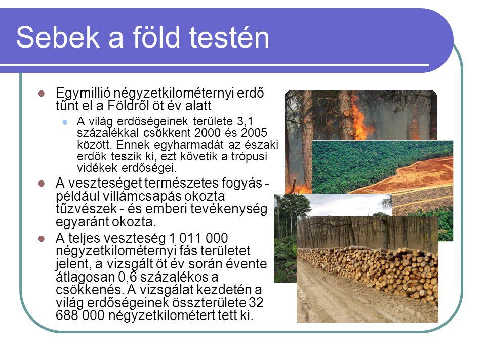Sebek a föld testén  Egymillió négyzetkilométernyi erdő tűnt el a Földről öt év alatt  A világ erdőségeinek területe 3,1 százalékkal csökkent 2000 és 2005 között.