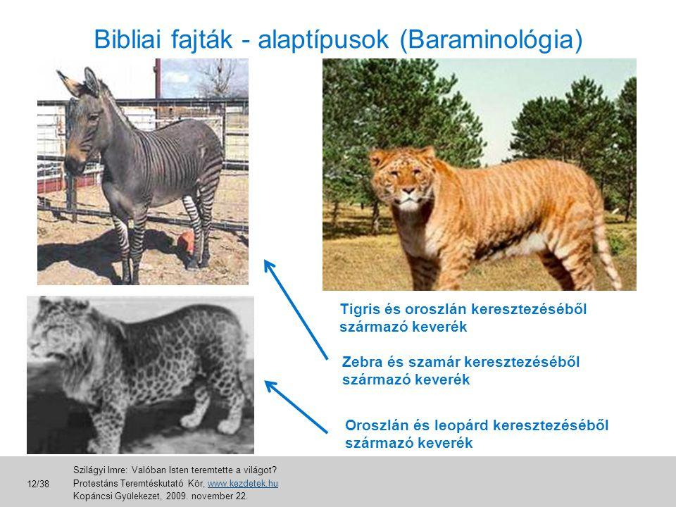 Bibliai fajták - alaptípusok (Baraminológia) Tigris és oroszlán keresztezéséből származó keverék Zebra és szamár keresztezéséből származó keverék Oros