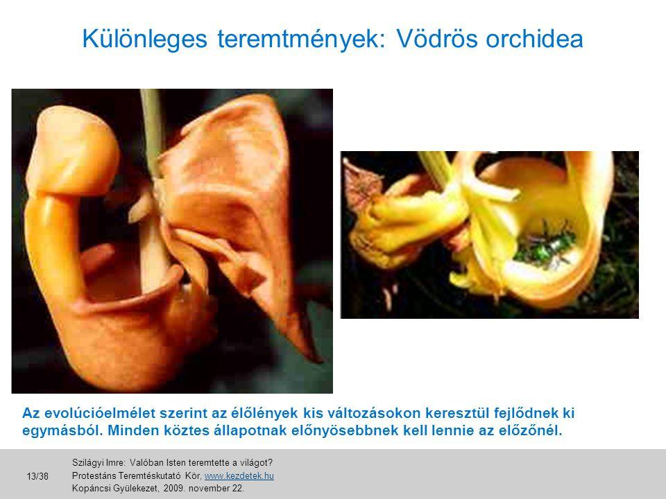 Különleges teremtmények: Vödrös orchidea Az evolúcióelmélet szerint az élőlények kis változásokon keresztül fejlődnek ki egymásból. Minden köztes álla
