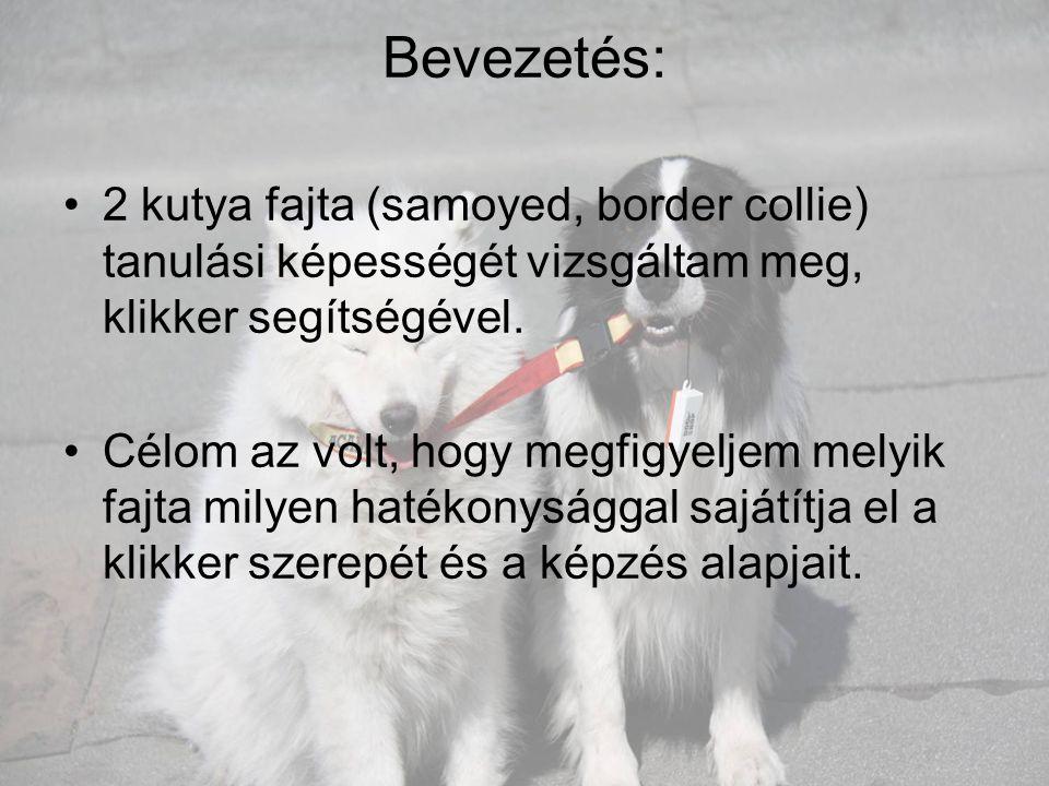 Bevezetés: •2 kutya fajta (samoyed, border collie) tanulási képességét vizsgáltam meg, klikker segítségével. •Célom az volt, hogy megfigyeljem melyik