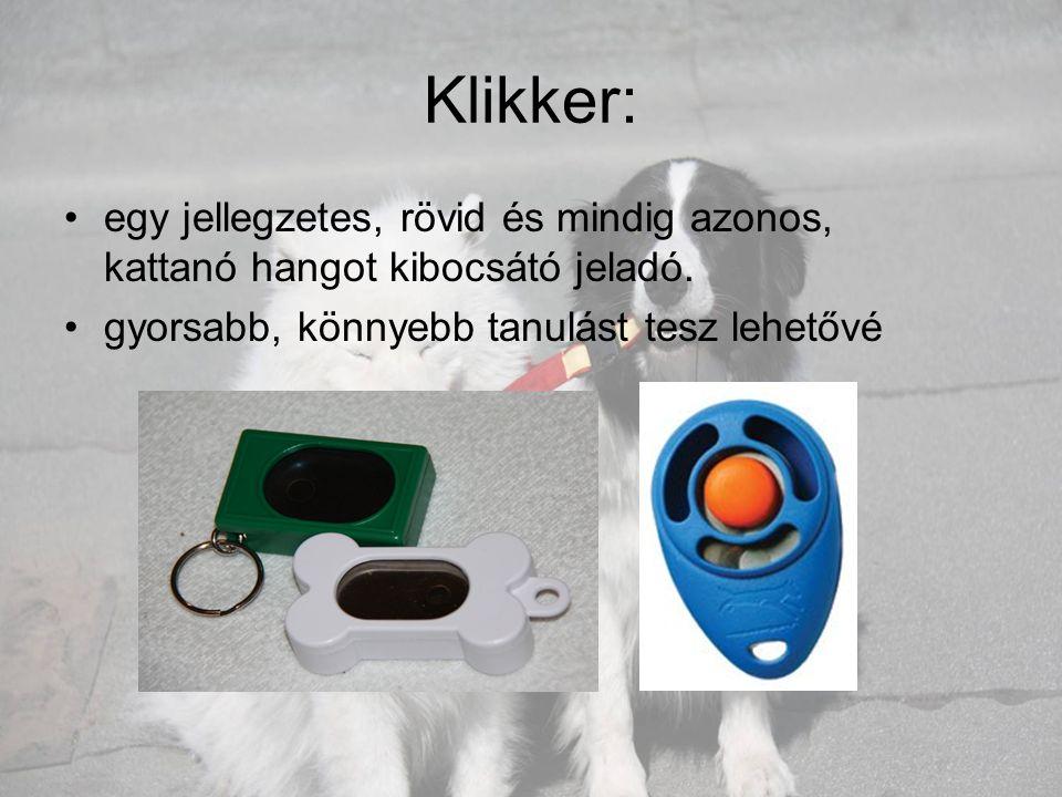 Samoyed: •Északnyugat- Szibériából származó kutyafajta, eredetileg szánhúzó, vadász, valamint rénszarvasterelő