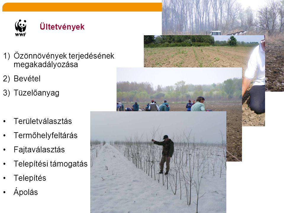 Ültetvények 1)Özönnövények terjedésének megakadályozása 2)Bevétel 3)Tüzelőanyag •Területválasztás •Termőhelyfeltárás •Fajtaválasztás •Telepítési támog