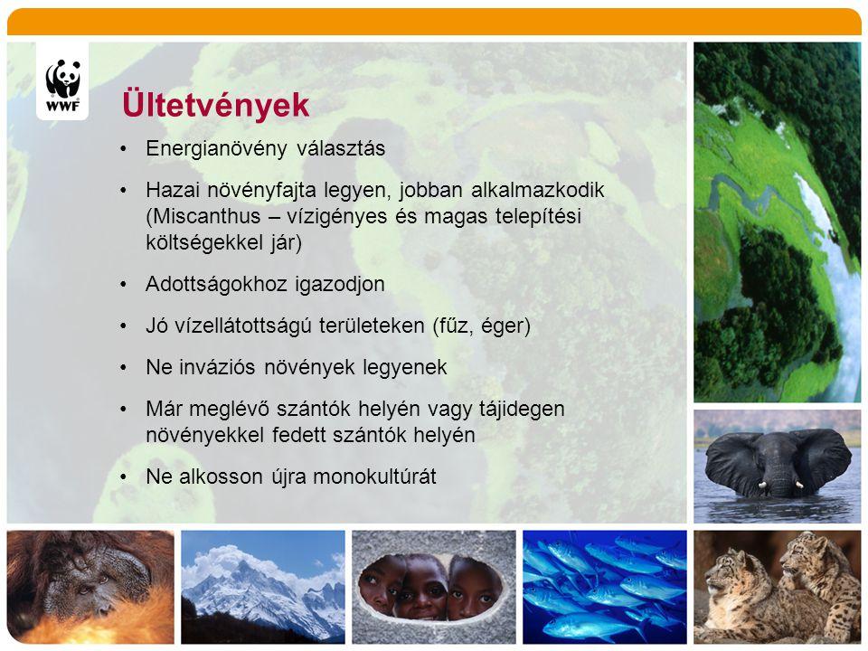 Ültetvények •Energianövény választás •Hazai növényfajta legyen, jobban alkalmazkodik (Miscanthus – vízigényes és magas telepítési költségekkel jár) •A