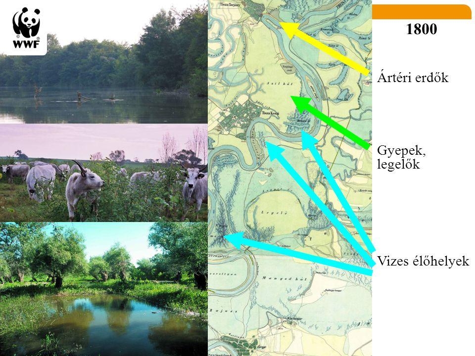 1800 Ártéri erdők Gyepek, legelők Vizes élőhelyek