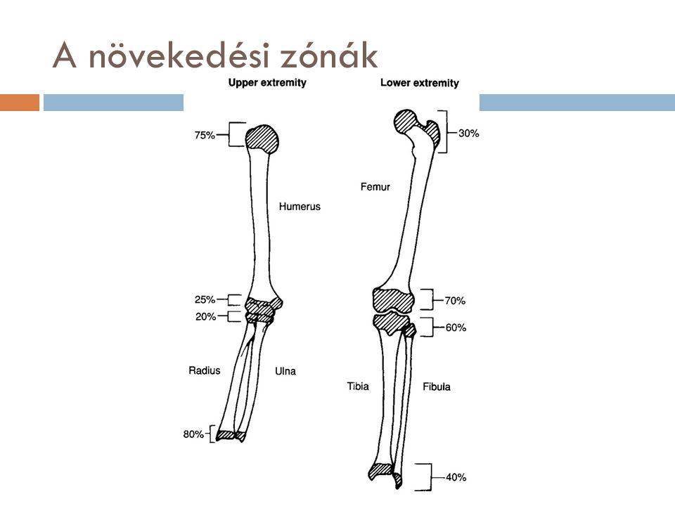 A pubertás időszaka  Pubertás alatt a csontképzés és mineralizáció egyensúlya felborul, emiatt nagyobb a kockázata a közép-súlyos fokú krónikus túlterhelésnek, a nagyfokú hirtelen túlterhelésnek, a csonterő csökkenésének.