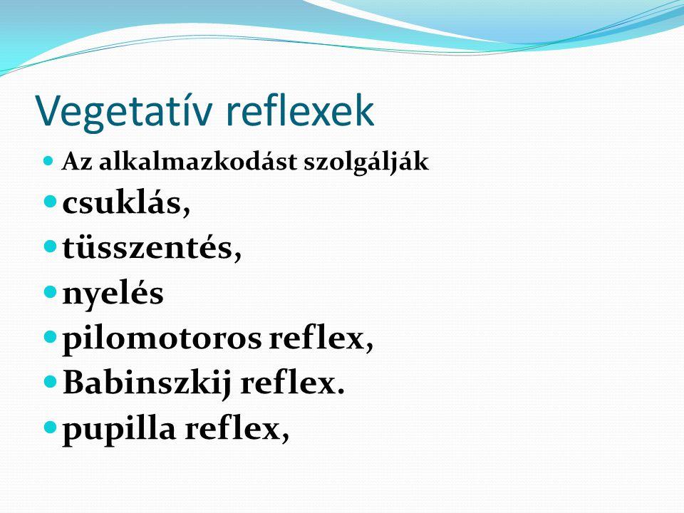 Vegetatív reflexek  Az alkalmazkodást szolgálják  csuklás,  tüsszentés,  nyelés  pilomotoros reflex,  Babinszkij reflex.  pupilla reflex,