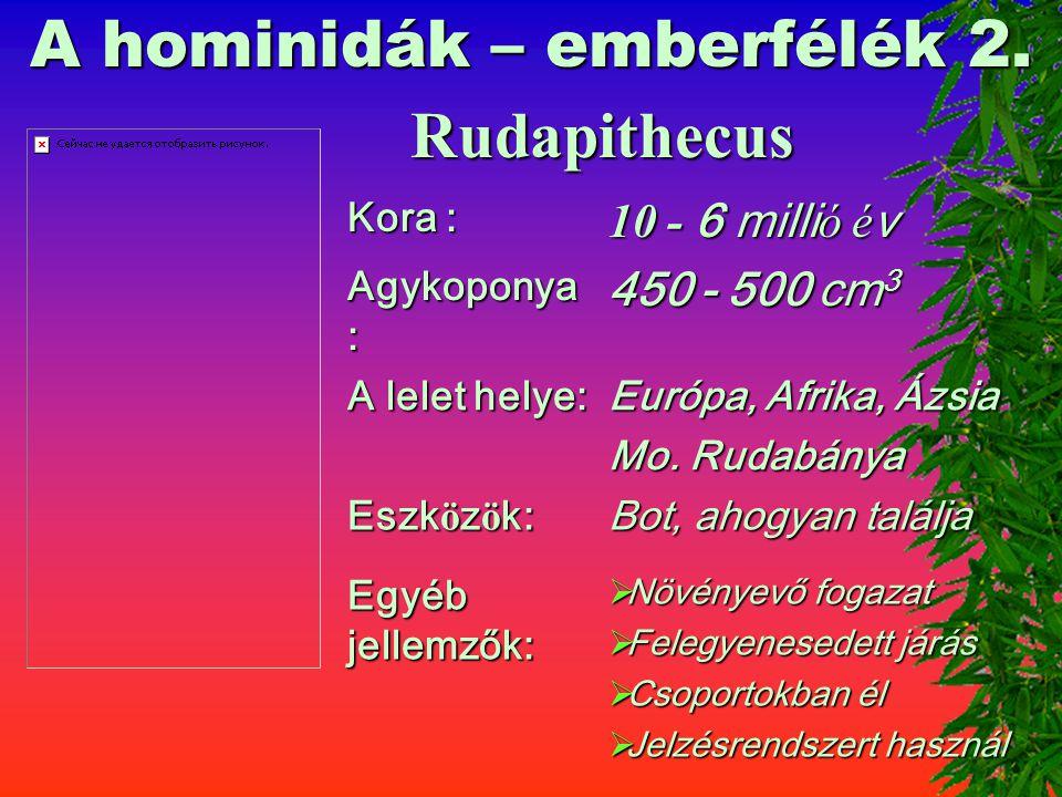 A hominidák – emberfélék 1. RAMAPITHECUS Kora : 14- 7 milli ó é v Agykoponya : 450 cm 3 A lelet helye: India, Afrika, Eszk ö z ö k: Bot, ahogyan talál