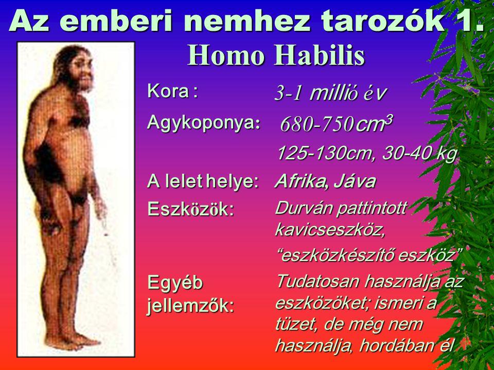 A hominidák – emberfélék 3. Australopithecus Kora : 5,5-2 milli ó é v Agykoponya : 500 cm 3 A lelet helye: Afrika Eszk ö z ö k: Bot, ahogyan találja E
