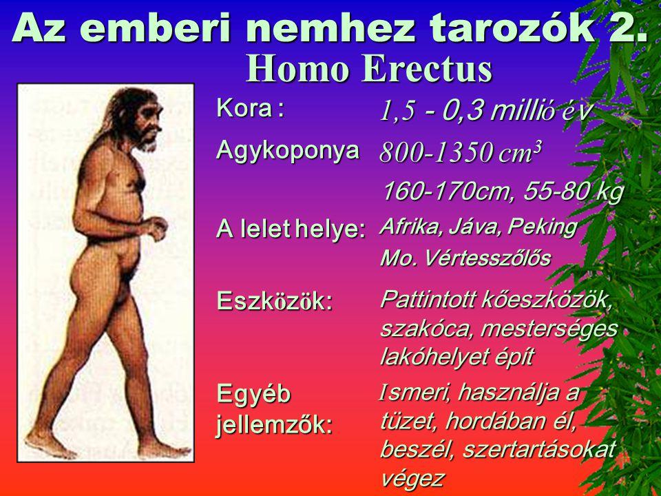 Az emberi nemhez tarozók 1. Homo Habilis Kora : 3-1 milli ó é v Agykoponya : 680-750 cm 3 680-750 cm 3 125-130cm, 30-40 kg A lelet helye: Afrika, Jáva