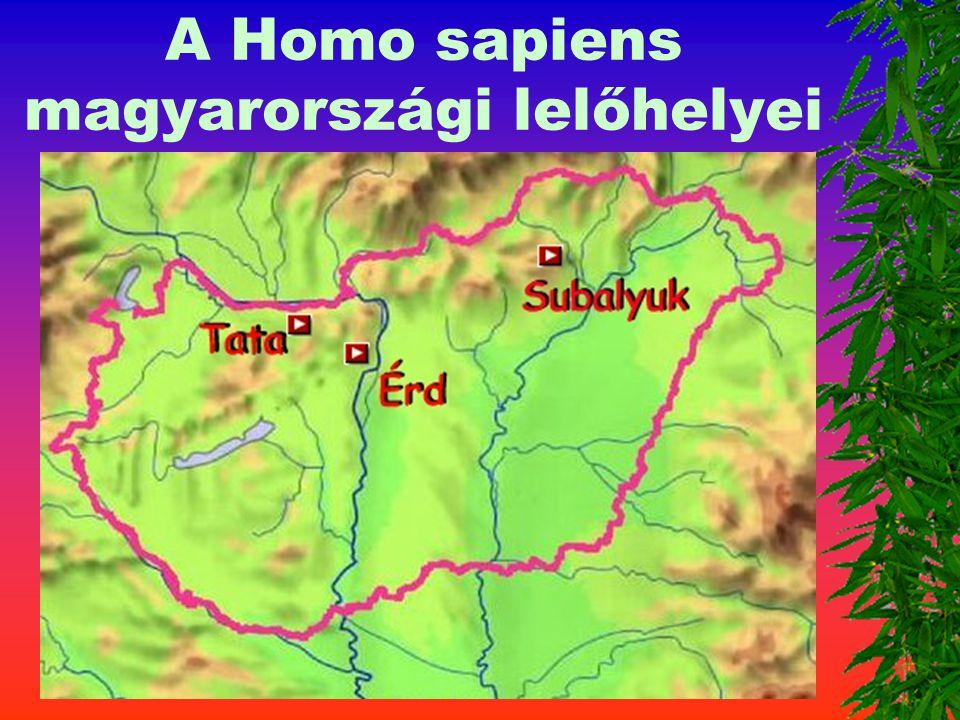 Az emberi nemhez tarozók 3. Homo sapiens Kora : 300 - 5 0 ezer é v Agykoponya 1400 cm 3 A lelet helye: Neander-völgy Mo:Tata, Érd, Subalyuk Eszk ö z ö