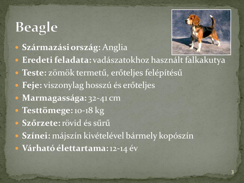  Származási ország: Anglia  Eredeti feladata: vadászatokhoz használt falkakutya  Teste: zömök termetű, erőteljes felépítésű  Feje: viszonylag hoss