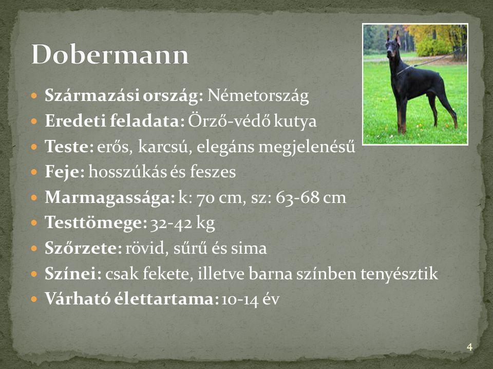 Származási ország: Németország  Eredeti feladata: Őrző-védő kutya  Teste: erős, karcsú, elegáns megjelenésű  Feje: hosszúkás és feszes  Marmagas