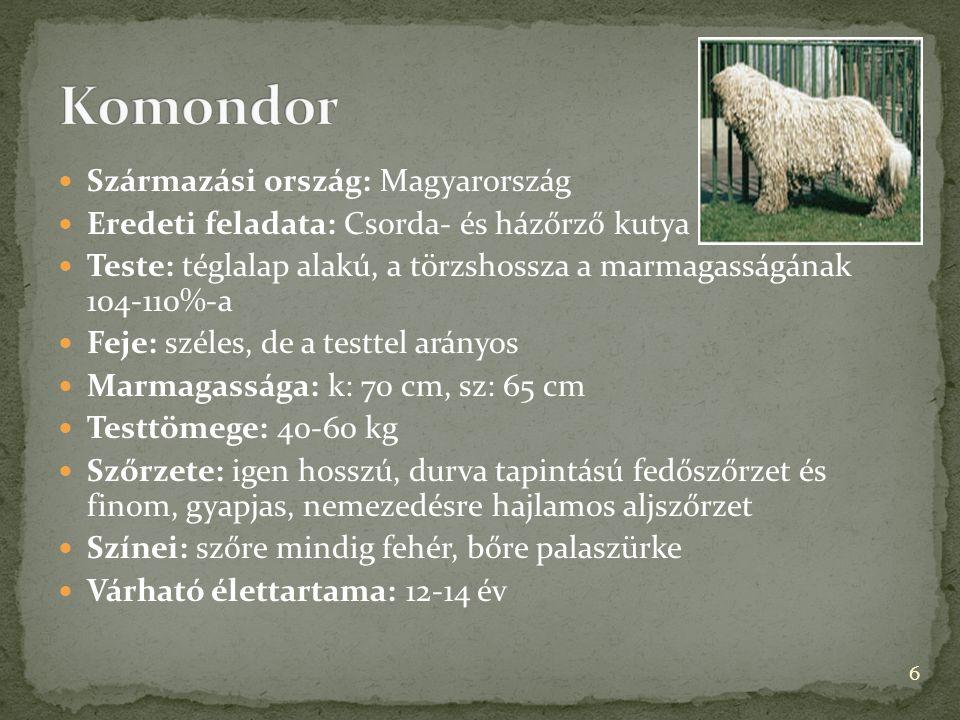  Származási ország: Magyarország  Eredeti feladata: Csorda- és házőrző kutya  Teste: téglalap alakú, a törzshossza a marmagasságának 104-110%-a  F