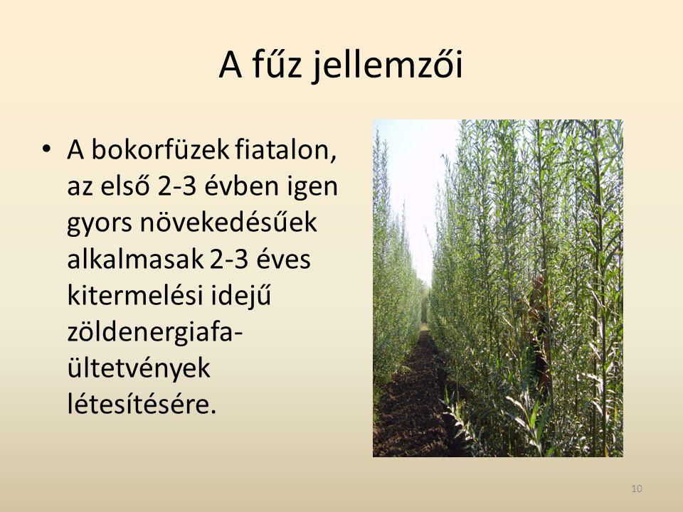 A fűz jellemzői • A bokorfüzek fiatalon, az első 2-3 évben igen gyors növekedésűek alkalmasak 2-3 éves kitermelési idejű zöldenergiafa- ültetvények lé