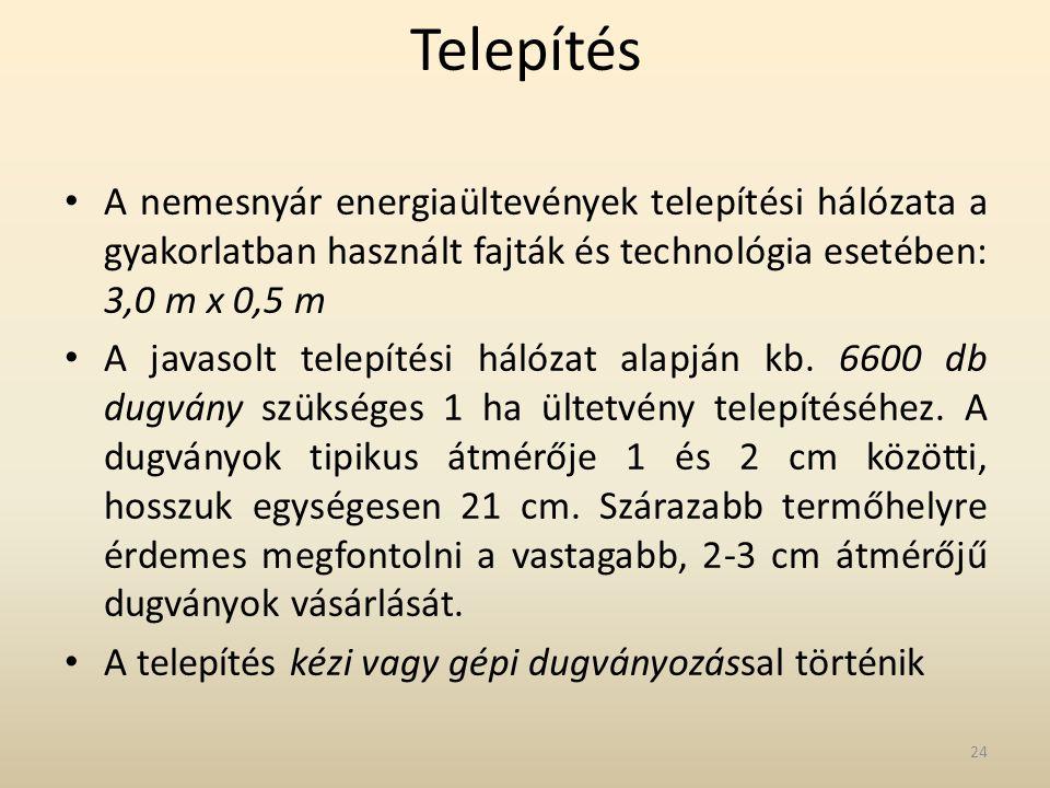 Telepítés • A nemesnyár energiaültevények telepítési hálózata a gyakorlatban használt fajták és technológia esetében: 3,0 m x 0,5 m • A javasolt telep