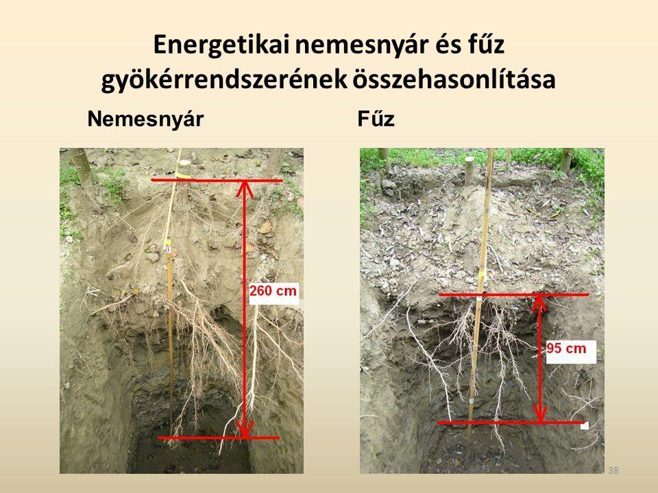Energetikai nemesnyár és fűz gyökérrendszerének összehasonlítása Nemesnyár Fűz 38