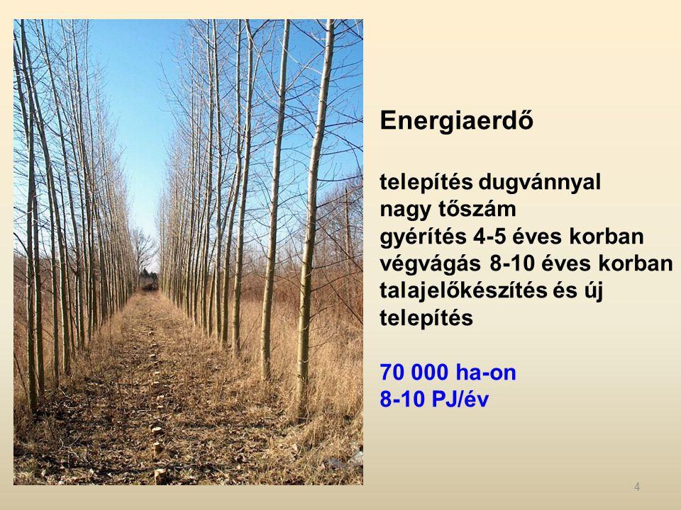 Energiaerdő telepítés dugvánnyal nagy tőszám gyérítés 4-5 éves korban végvágás 8-10 éves korban talajelőkészítés és új telepítés 70 000 ha-on 8-10 PJ/év 4