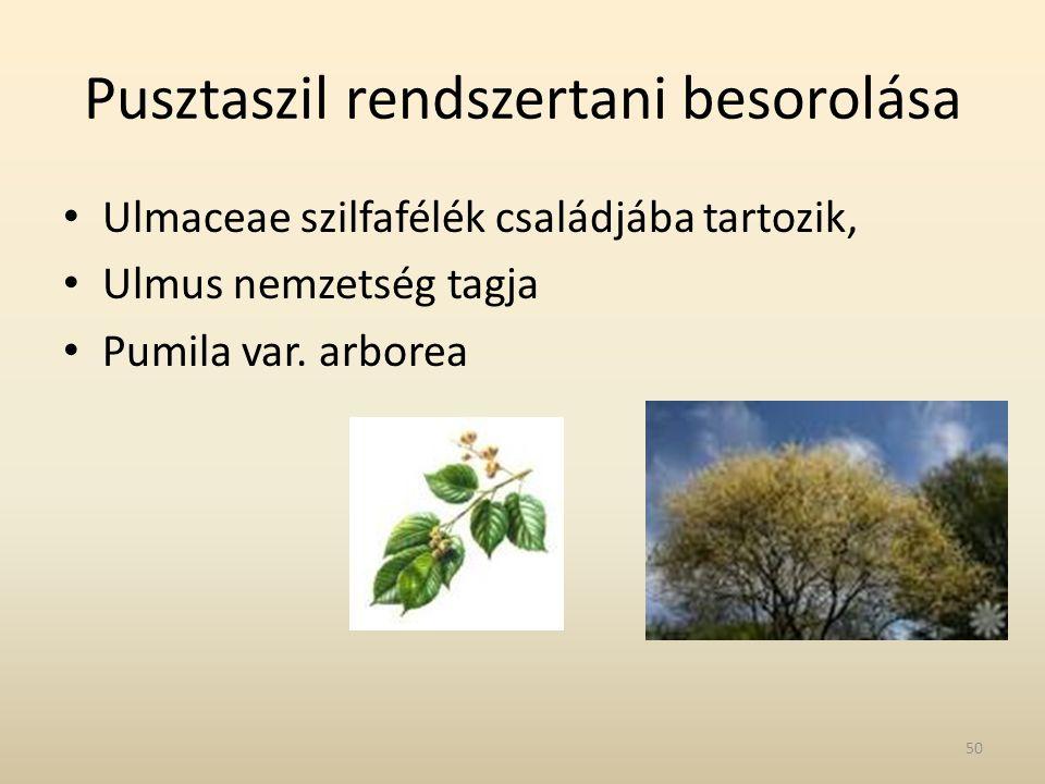 Pusztaszil rendszertani besorolása • Ulmaceae szilfafélék családjába tartozik, • Ulmus nemzetség tagja • Pumila var. arborea 50