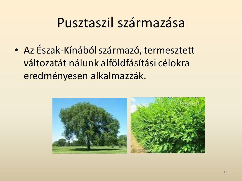 Pusztaszil származása • Az Észak-Kínából származó, termesztett változatát nálunk alföldfásítási célokra eredményesen alkalmazzák. 51