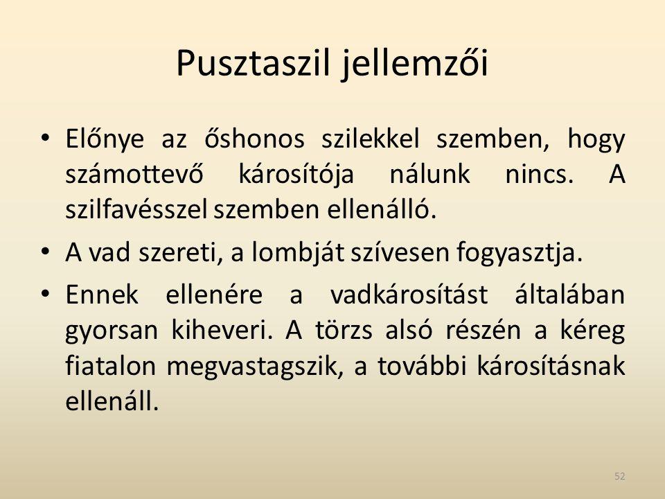 Pusztaszil jellemzői • Előnye az őshonos szilekkel szemben, hogy számottevő károsítója nálunk nincs.